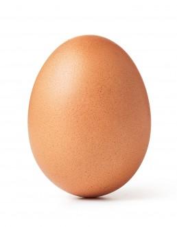 Flevotrade eggs