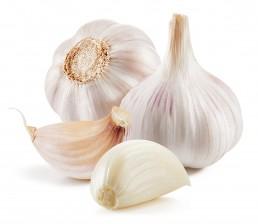 Flevotrade garlic